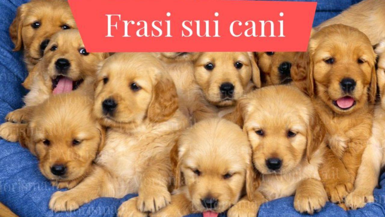 Frasi Sui Cani Da Tatuare.Le Piu Belle Frasi Aforismi E Citazioni Sui Cani Raccolta Completa L Aforisma It Frasi Citazioni E Aforismi
