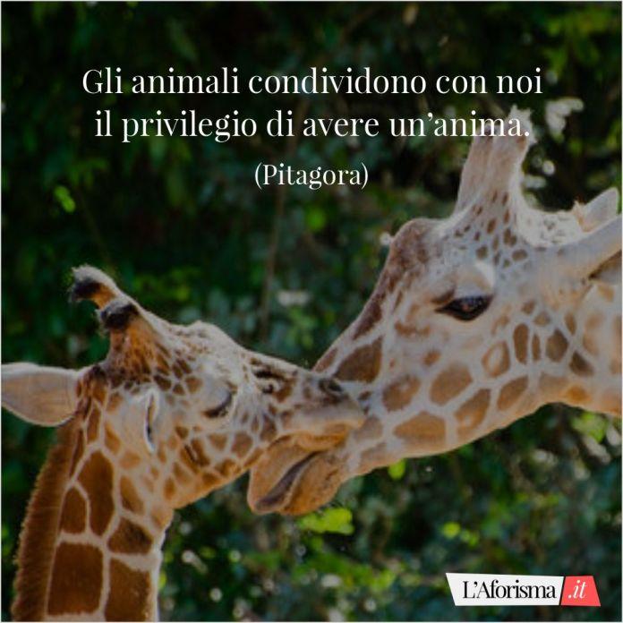Gli animali condividono con noi il privilegio di avere un'anima. (Pitagora)