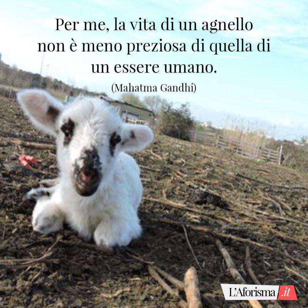 Per me, la vita di un agnello non è meno preziosa di quella di un essere umano. (Mahatma Gandhi)
