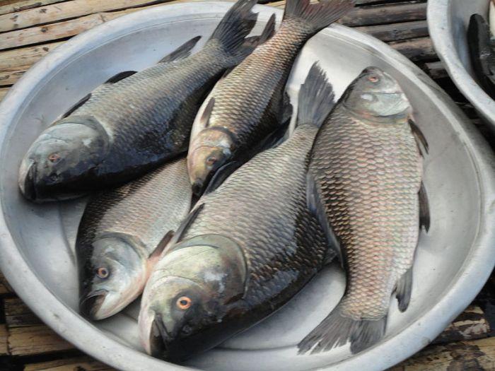 File:Bangladeshi Fish03.jpg