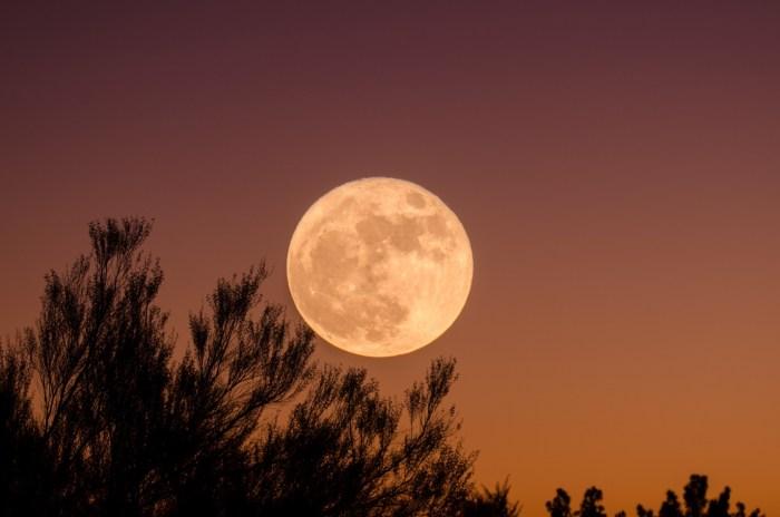 C:\Users\Zubair\Downloads\tree-sky-sun-sunset-night-morning-91283-pxhere.com.jpg