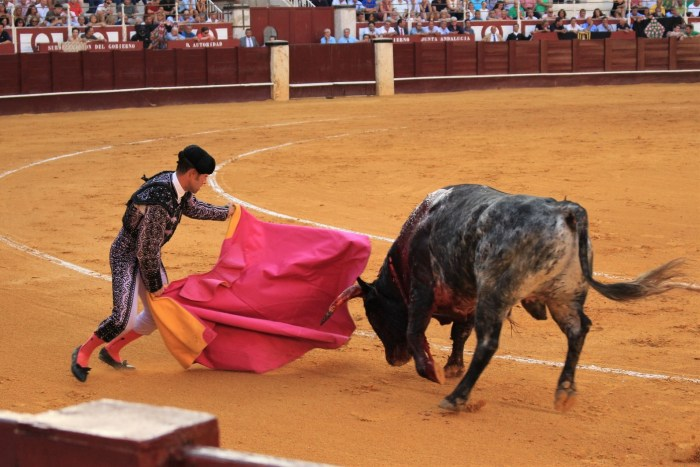 C:\Users\Zubair\Downloads\bull-fighting-3606156_1920.jpg
