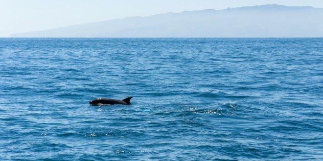 Ver delfines y ballenas tenerife