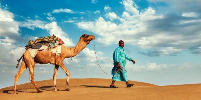 Camello en Jaisalmer
