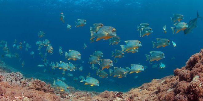 Filipinas bajo el mar