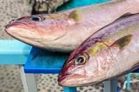 Pescado Fresco · Restaurante La Gaviota · Piscinas La Fajana de Barlovento · La Palma · Islas Canarias