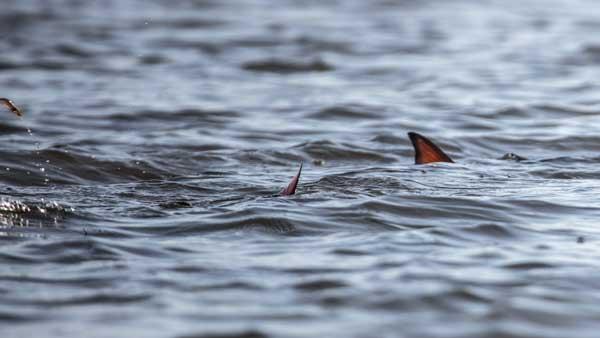 mosquito lagoon inshore fishing charters