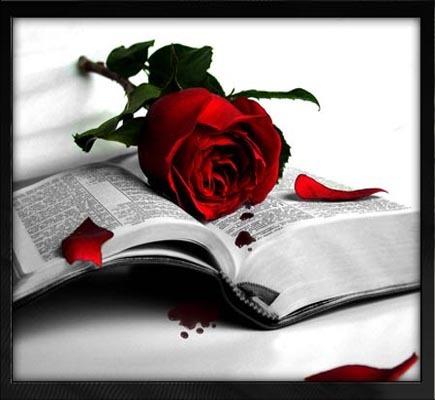 llibre-i-rosa