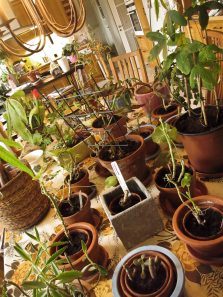 A total of 171 plants were taken care of