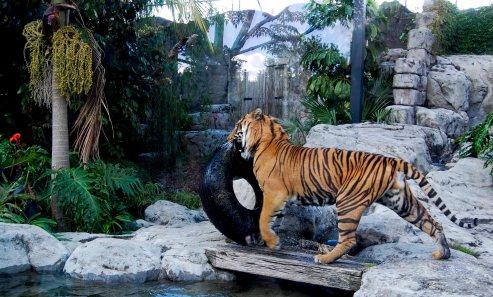 NZ, Auckland zoo