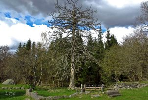 For standing tall as the old warden tree even if the settlement is long since gone