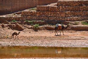 Marocko 303_copy