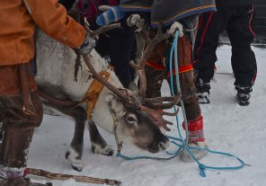 ...and the reindeer eager!