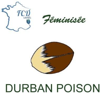 Graine de collection durban poison feminisée