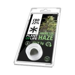 Amnesia Haze Jelly 22% cbd 3g