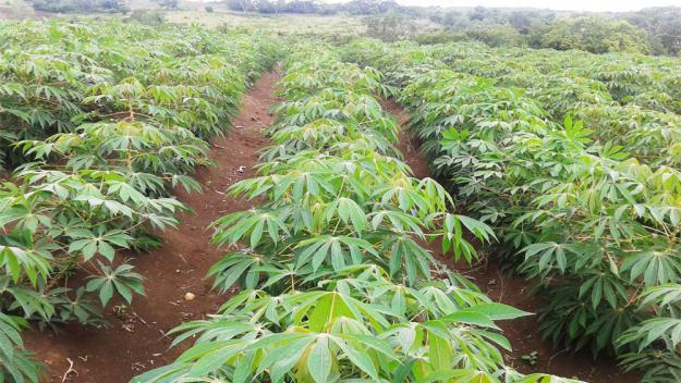 Con algunas vicisitudes campesinos de maicao sobreviven for Como hacer un criadero de cachamas