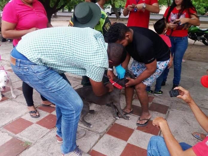 Aspecto de la campaña de vacunación que se realiza en San Juan del Cesar.