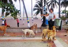 Rossanna Pinto, líder de la organización, Retrato de los Perros Olvidados, se dedica a alimentarlos diariamente.
