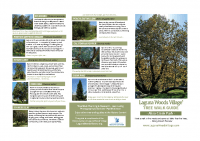 Aliso Creek Tree Guide 8.5×11″