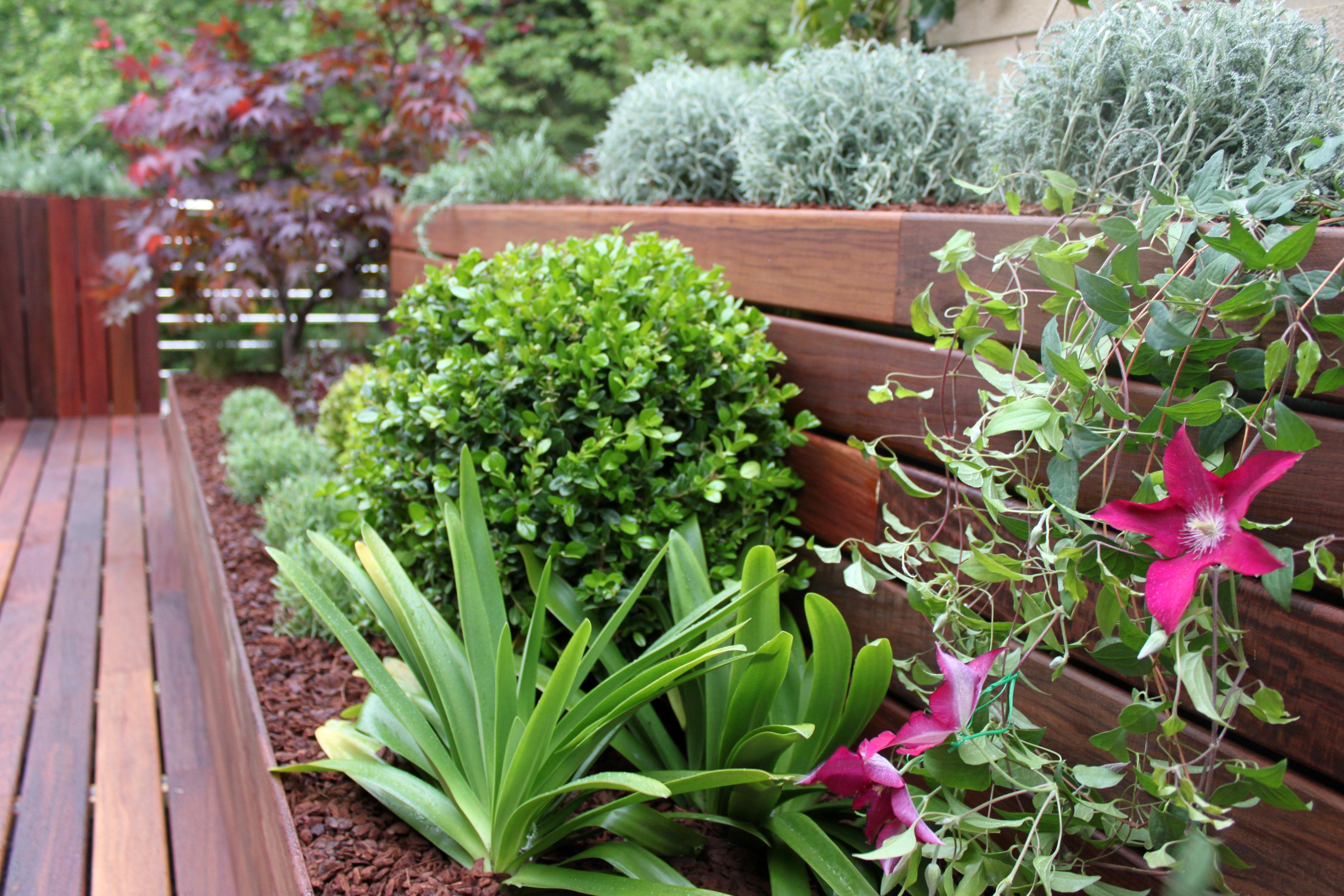 Las 9 mejores plantas para terrazas la habitaci n verde for Plantas para piscinas