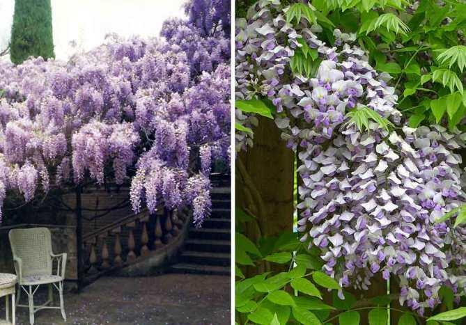Jardines con flores todo el a o la habitaci n verde - Plantas exteriores todo el ano ...