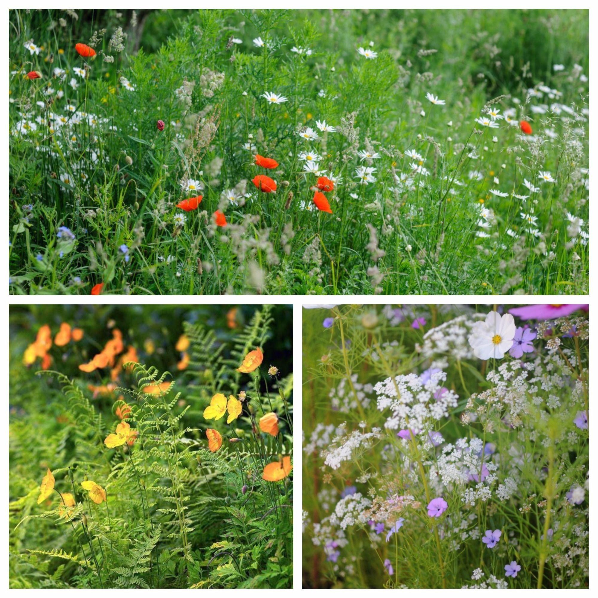 Jardines sin cesped finest un nuevo concepto de jardinera for Como decorar un jardin sin cesped