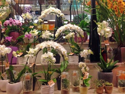 Perillard-fleurs-halle-de-rive-02
