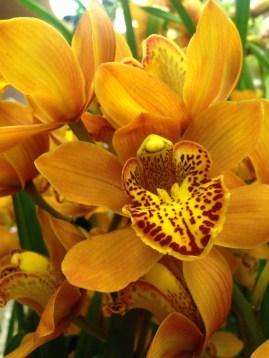 Perillard-fleurs-halle-de-rive-04