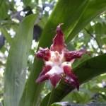Jardin des orchidées à Puyo