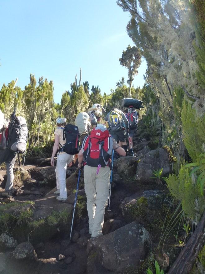 Montée vers Shira Camp (3800m)