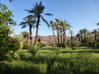 Tamnougalt vallée de Drâa Maroc