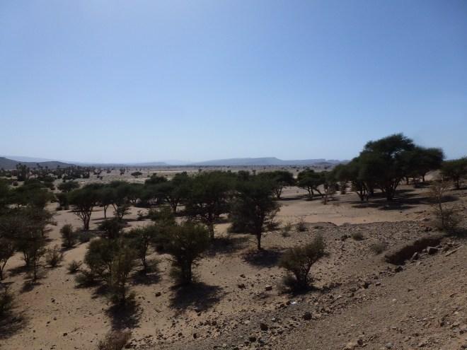 Désert entre Alnif et Zagora - Maroc