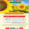 Sunflower Production In Pakistan Areas Dates Info For 2017 Urdu