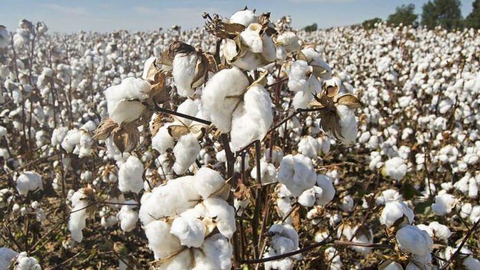 Cotton price in pakistan