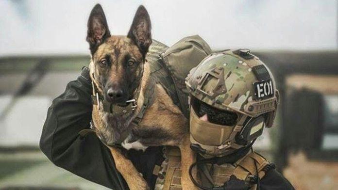 Military Dogs USA