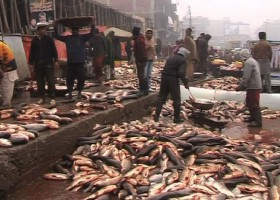 PFA shuts nine fish points for selling stale fish