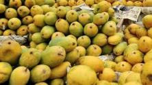 PFA discarded a huge quantity of the mango ripped with chemical