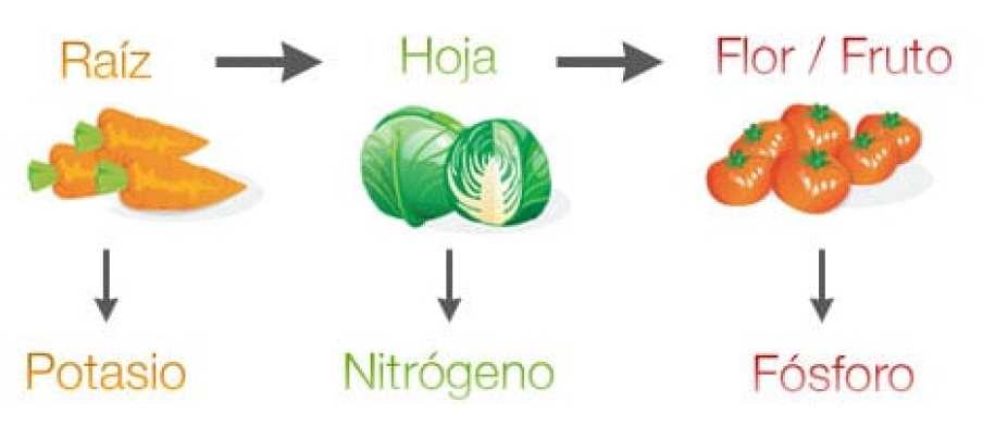 rotacion-cultivos