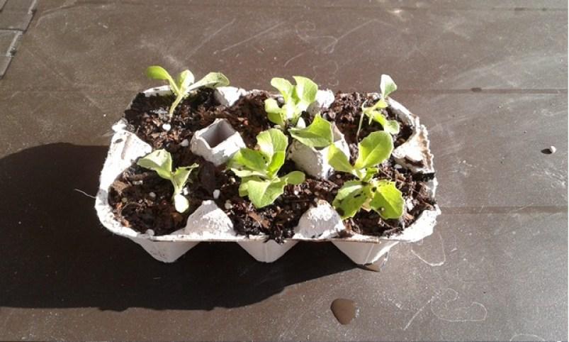 semilleros reciclados 3