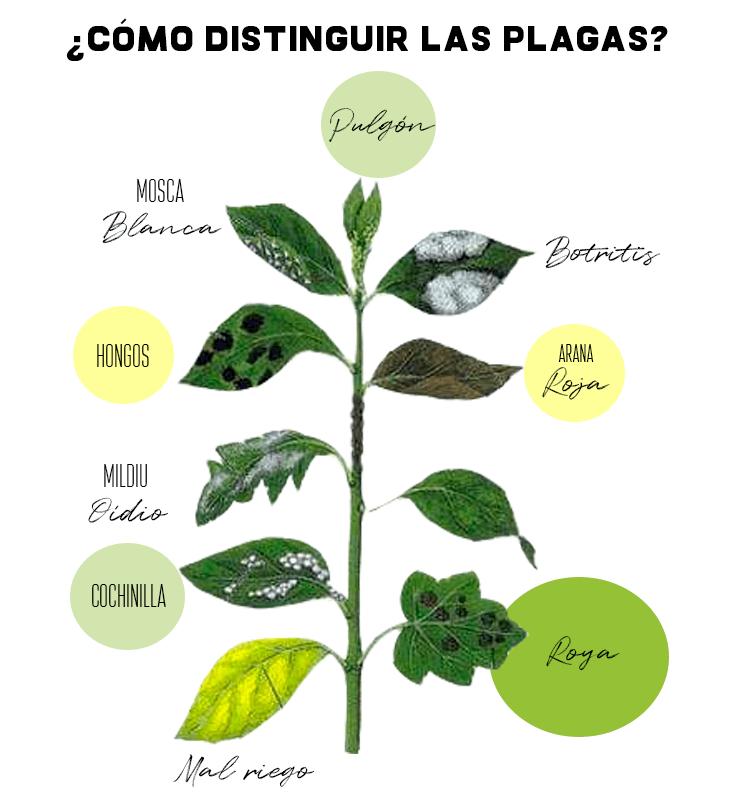 Plagas en hojas hortalizas