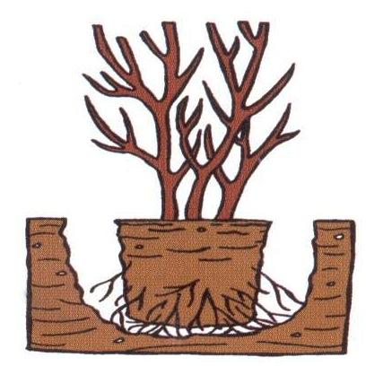 Plantation arbuste en pot - centrez.JPG
