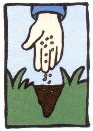 Sow grass seeds.