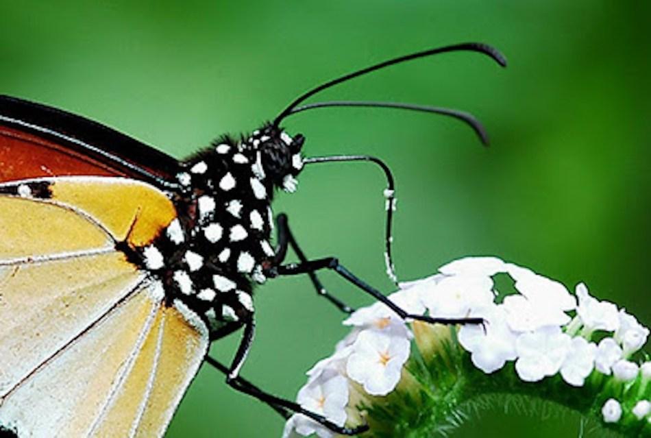 20180307A Khew SK, the-butterfly675.blogspot.ca.jpg