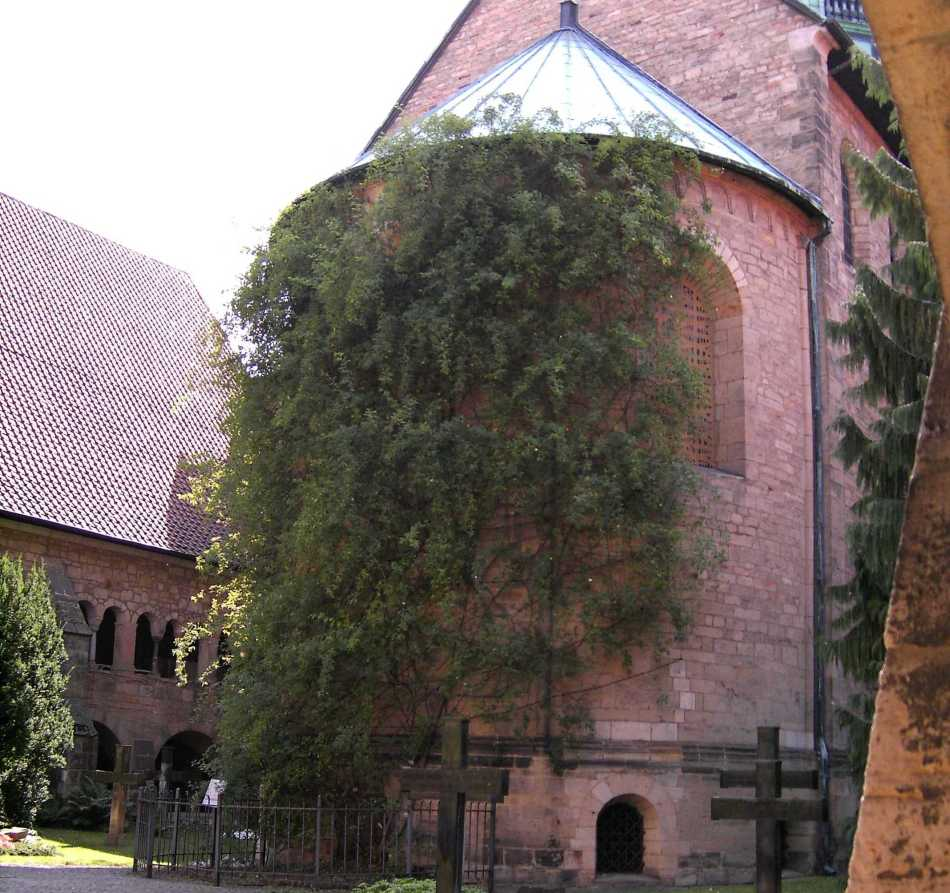 20189021 Hildesheim Cathedral.JPG