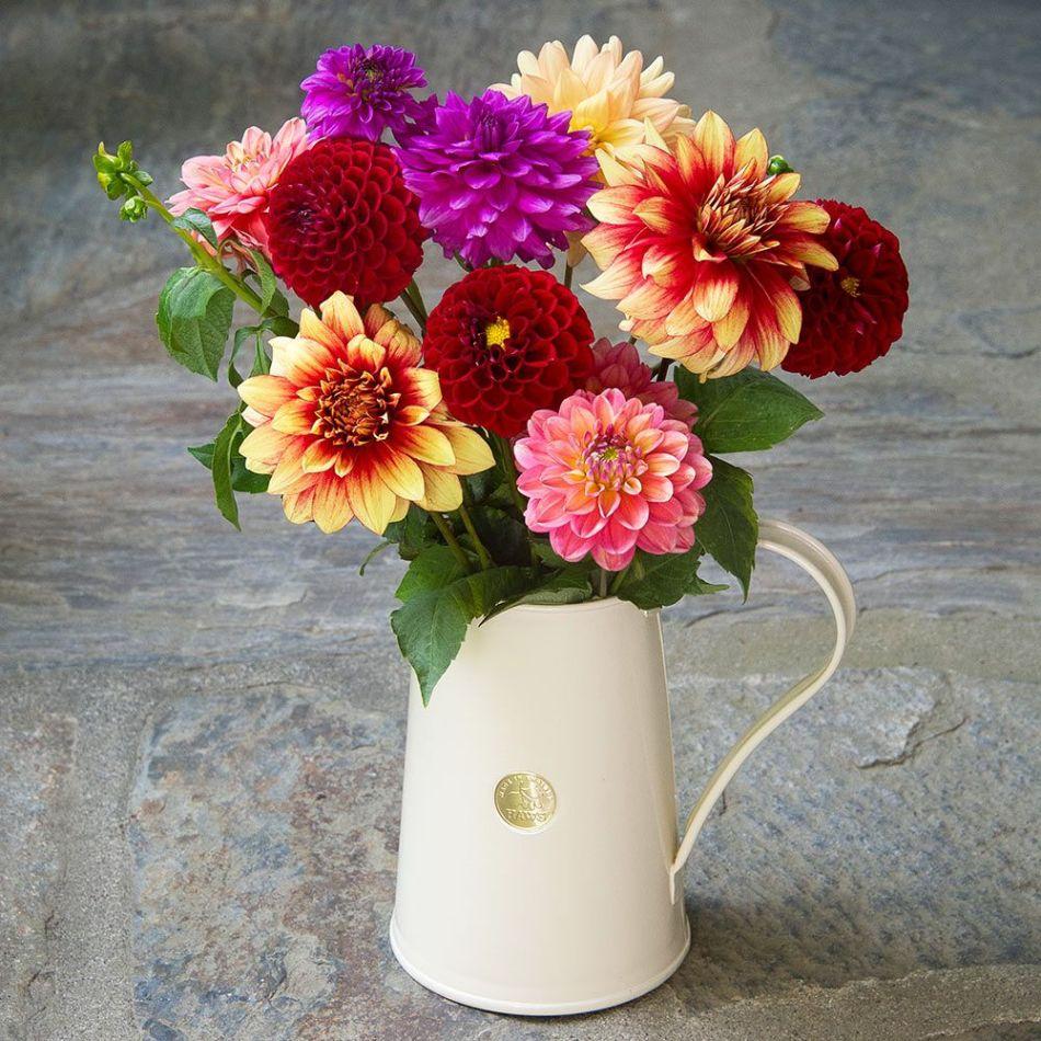 20190113R www.whiteflowerfarm.com.Jpg
