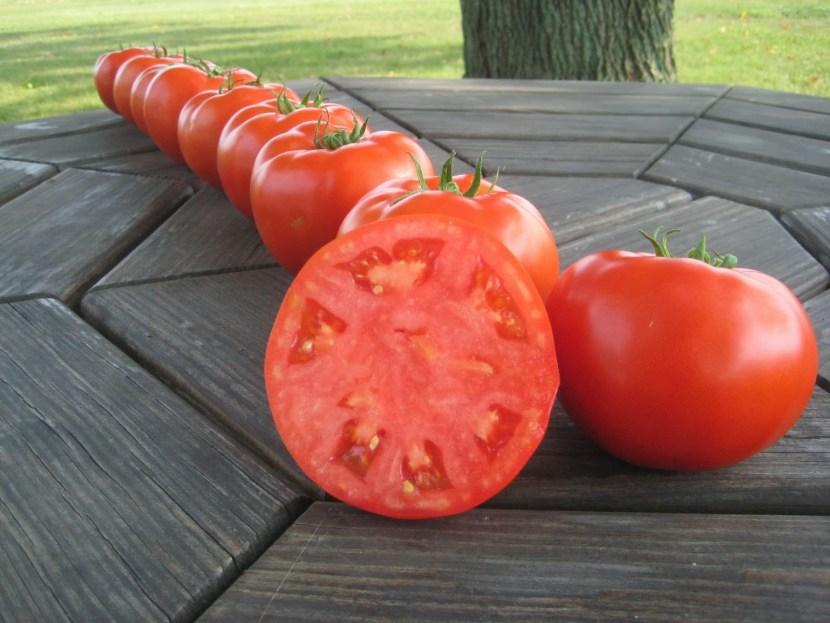 'Mountain Magic' red tomatoes