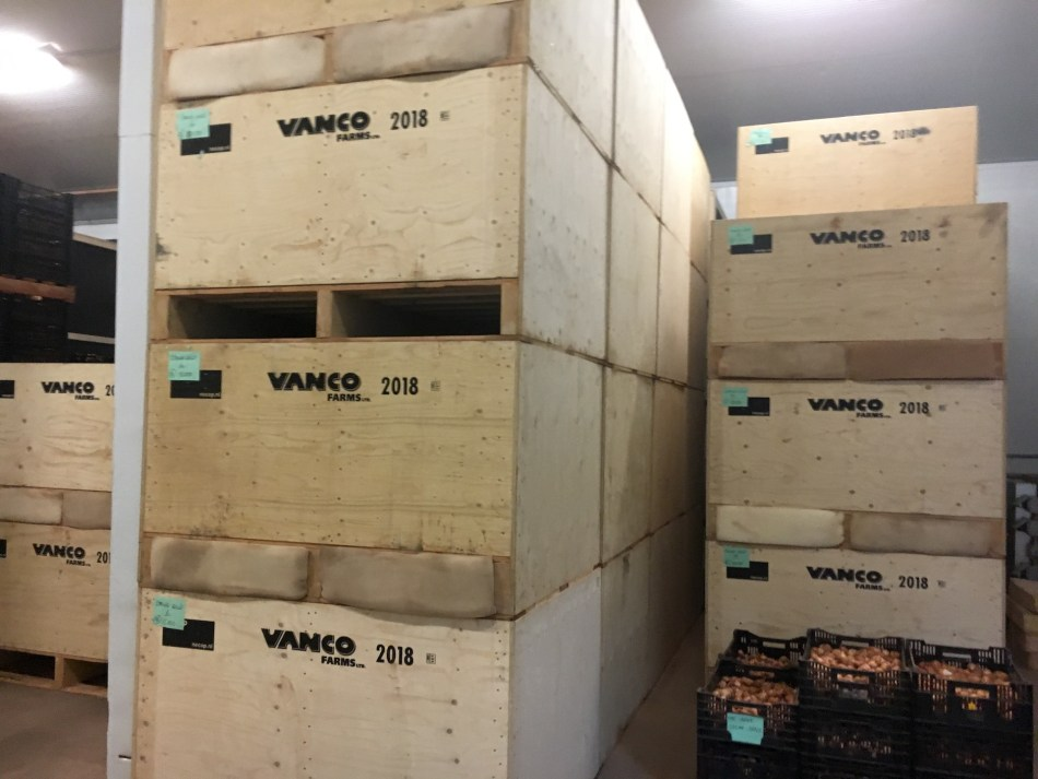 Crates of bulbs piled high, labeled Vanco Farms.