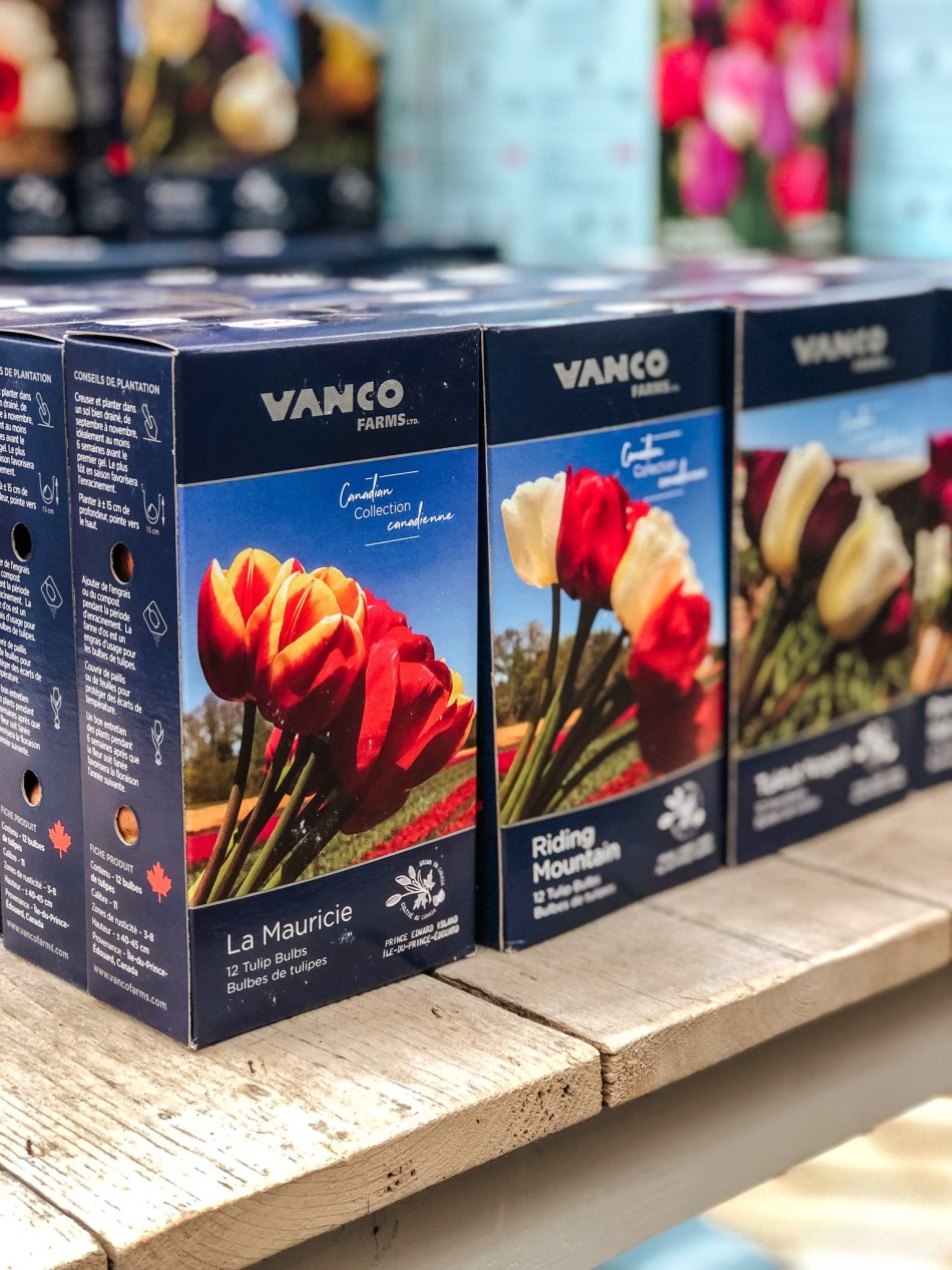 Boxes of tulip bulbs with colour labels. Names include La Mauricie and Riding Mountain