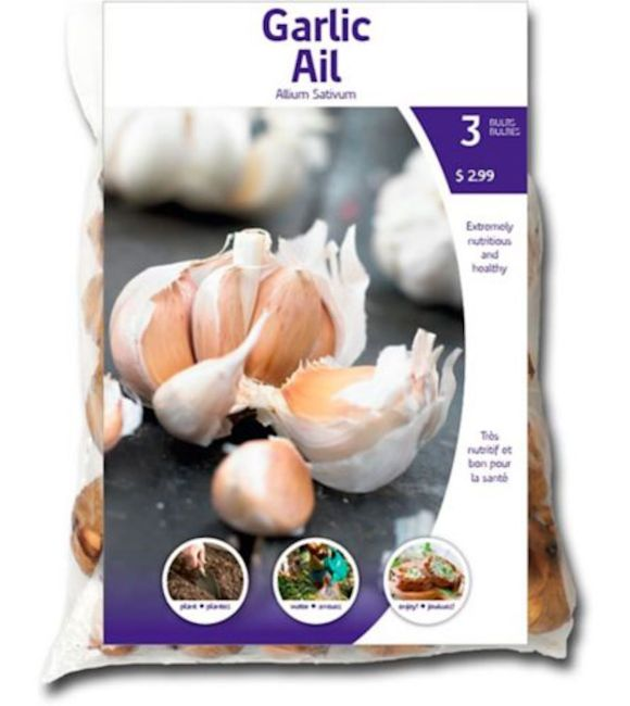 Commercial package of seed garlic in French and English.