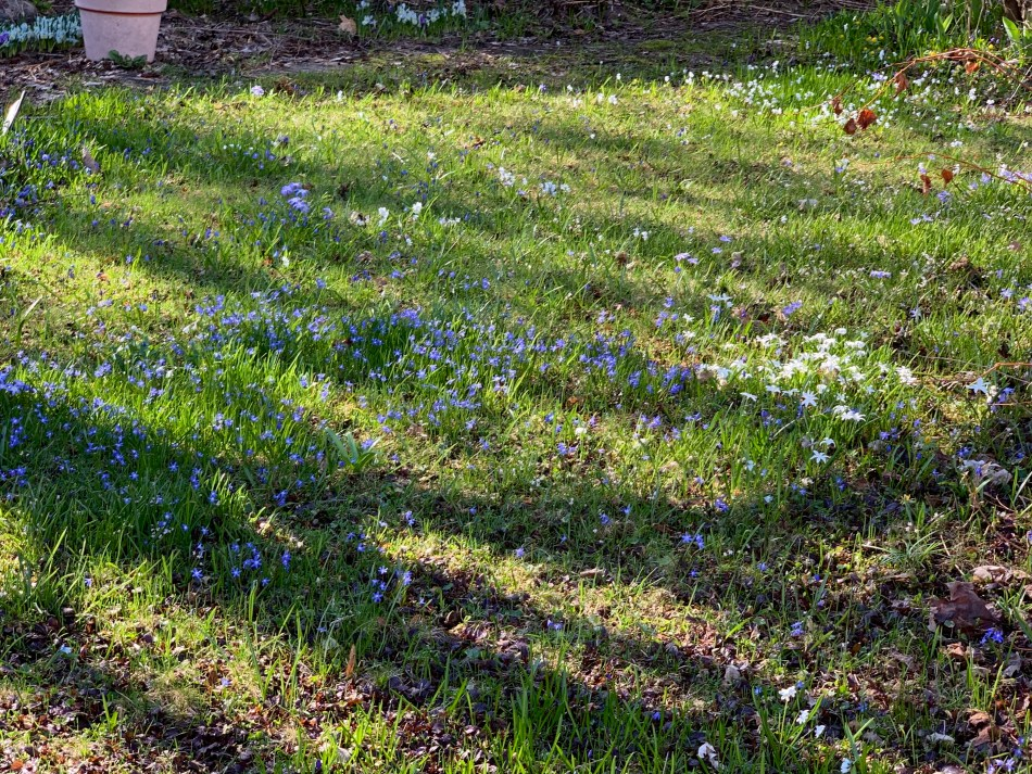 Lawn with various small bulbs